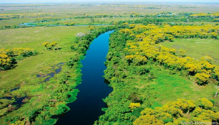 Bioma Pantanal
